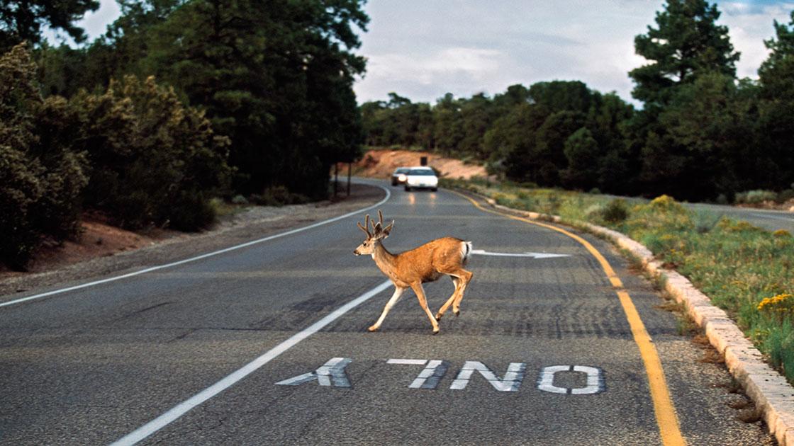 Deer collisions soar in November
